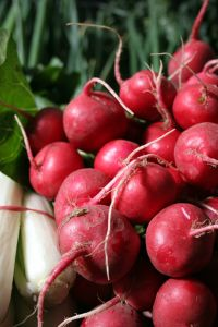 radishes red at the market